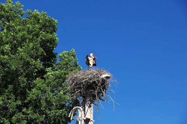 Bocianie gniazdo na białorusi