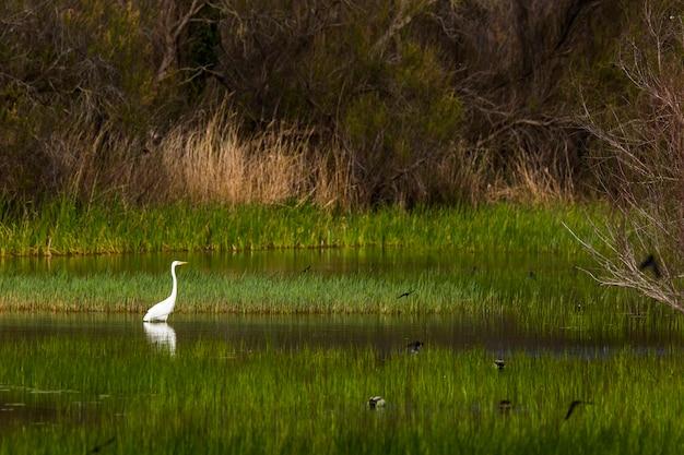 Bociany wiosną w rezerwacie przyrody aiguamolls de l'emporda w hiszpanii.