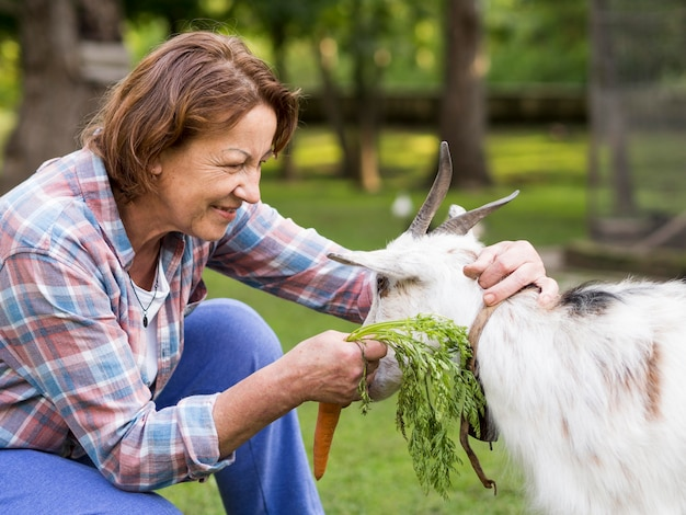 Bocznego widoku kobieta karmi kózki z marchewkami