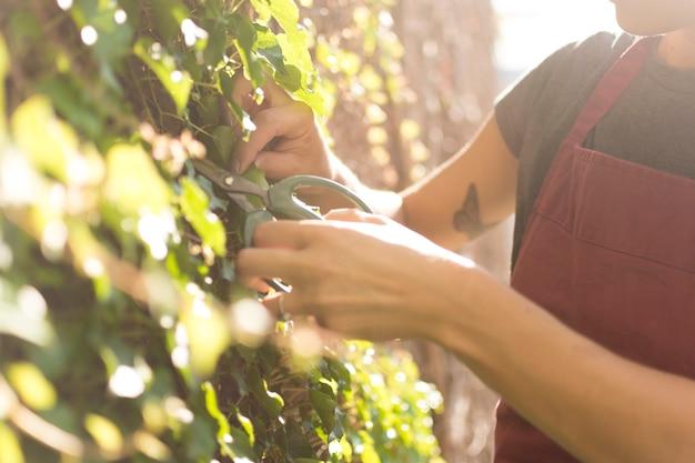 Bocznego widoku młoda kobieta bierze opiekę rośliny