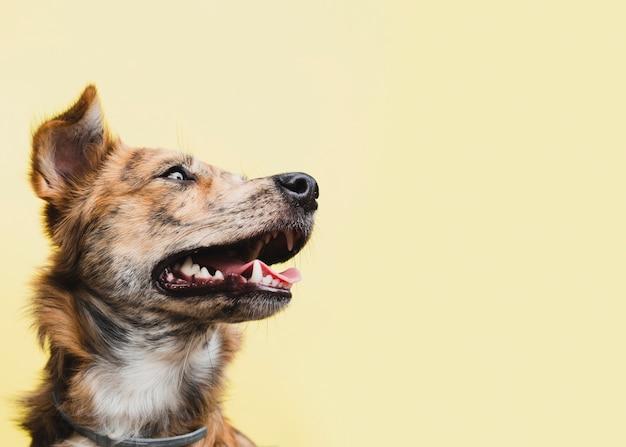 Bocznego widoku pies patrzeje daleko od przestrzeń