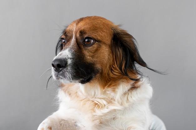 Bocznego widoku smutny pies patrzeje daleko od