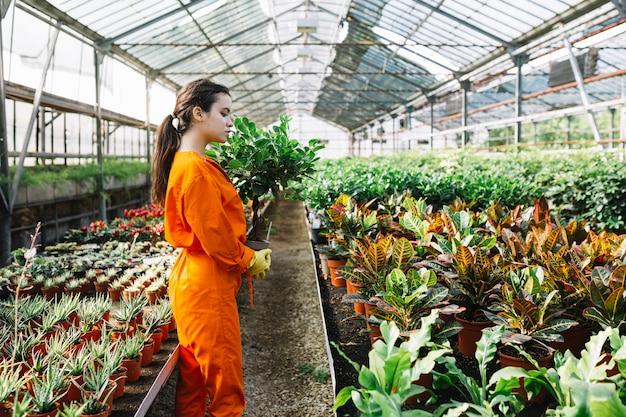 Boczny widok żeńska ogrodniczka z doniczkową rośliną w szklarni