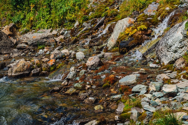 Bogata flora wyżyn. czerwone i zielone mchy, kolorowe rośliny, porosty, mały wodospad ze skały. woda źródlana na zboczu góry. niesamowite naturalne tło z piękną roślinnością gór.
