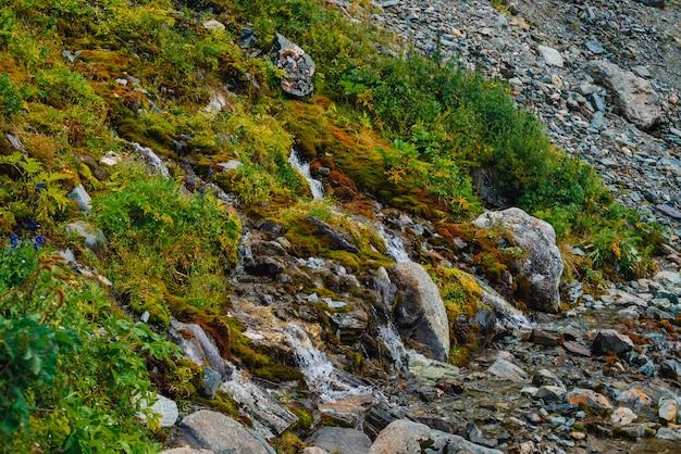 Bogata flora wyżyn. czerwone i zielone mchy, kolorowe rośliny, porosty, mały wodospad ze skały. woda źródlana na zboczu góry.