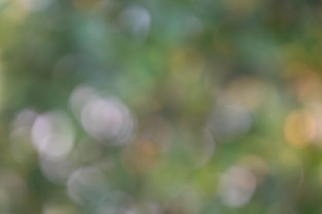Bokeh drzewa liście dla natury tła i save zielonego pojęcie
