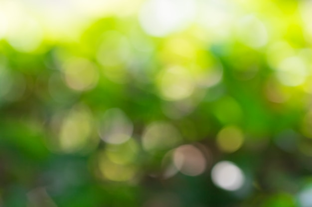 Bokeh drzewni liście dla natury tła