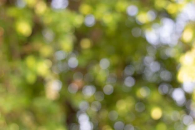 Bokeh drzewo liście dla natury tła i save zieleń