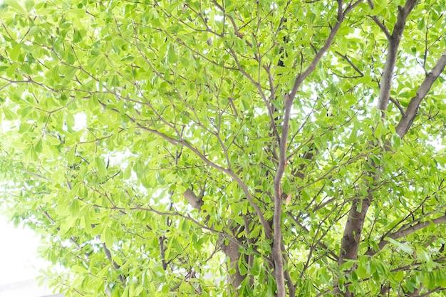 Bokeh drzewo natura tło z promieni słonecznych na lato.
