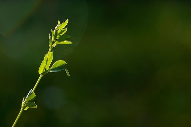 Bokeh natury, tło natura, kolory zielone. światło słoneczne na trawie i rosnących roślinach. piękna natura.