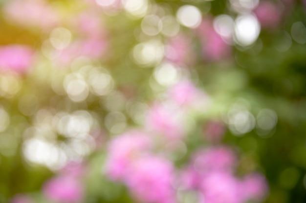 Bokeh natury zieleń i kwiat