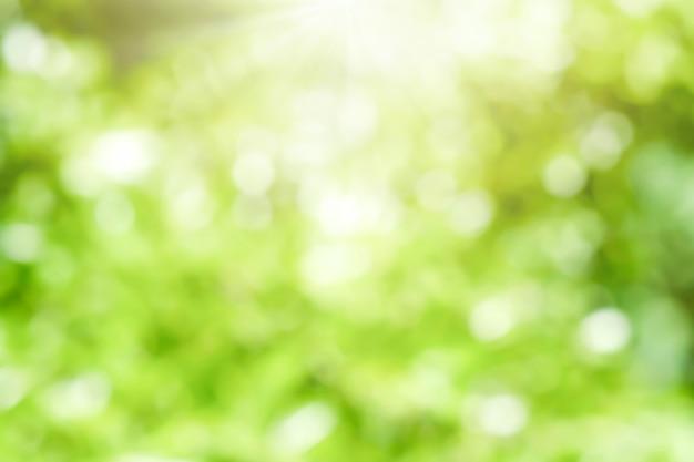 Bokeh rozmycie drzewo natura tło z promieni słonecznych na lato. wiosna.