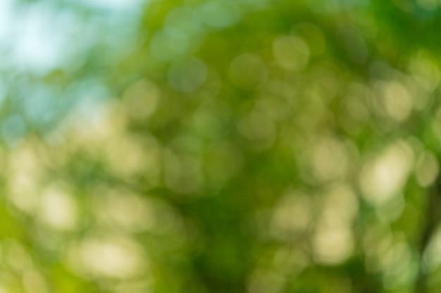 Bokeh zielone liście rozmycie tła