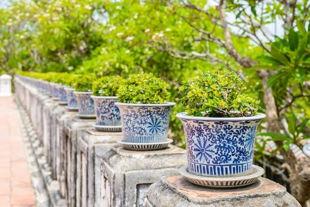 Bonsai, szorstki krzak syjamski w porcelanowych doniczkach