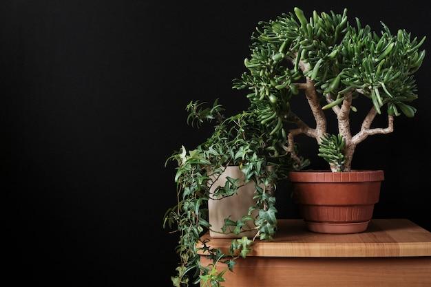 Bonsai z wewnętrznymi bluszczowymi roślinami doniczkowymi