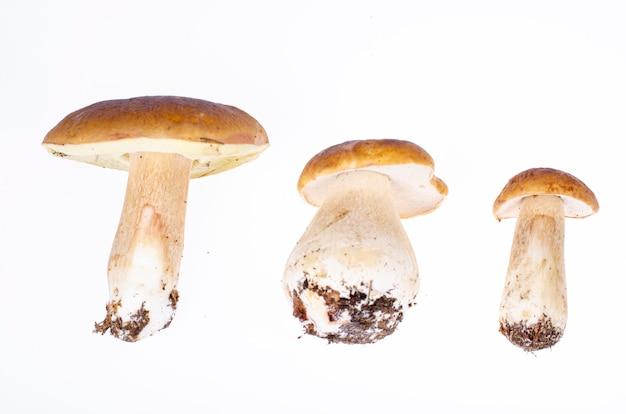 Borowik jadalny las na białym tle. zdjęcie studyjne.