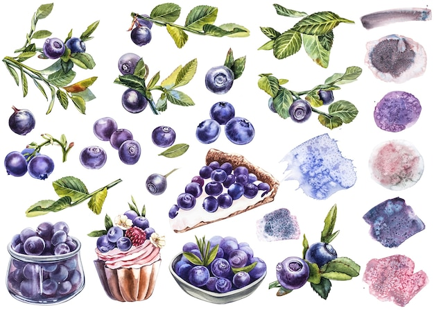 Borówka amerykańska. akwarela ilustracja botaniczna. ręcznie rysowane borówka akwarela malowanie na białym tle.