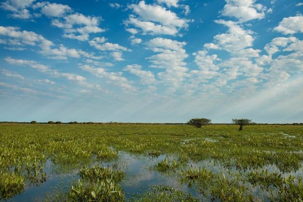 Boskie światło na polach brazylijskich pantanal (mokradeł), w stanie mato grosso do sul, w środkowo-zachodnim regionie kraju
