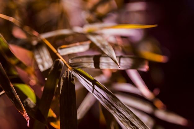 Botaniczne liście bambusa