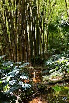 Botaniczny las bambusowy w świetle dziennym