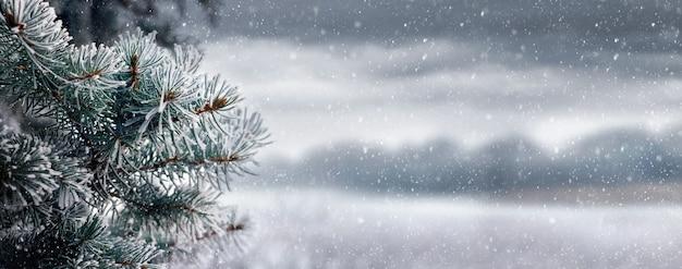 Boże narodzenie i nowy rok tło z gałęzi świerkowych na tle pochmurnego krajobrazu podczas opadów śniegu