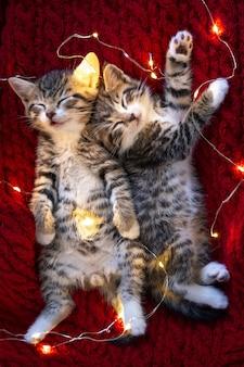 Boże narodzenie koty. dwa słodkie małe kocięta w paski śpiące z girlandą świateł na czerwono