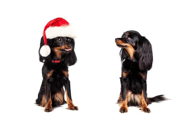 Boże narodzenie pies w santa hat drażnił małego psa na białym tle