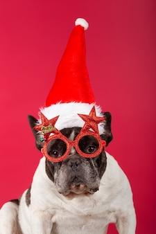 Boże narodzenie pies z zabawnymi okularami przeciwsłonecznymi