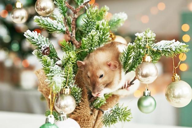 Boże narodzenie szczur symbol nowego roku 2020. rok szczura. chiński nowy rok 2020. świąteczne zabawki, bokeh. szczur na tle ozdób choinkowych. szablon kartki świąteczne pozdrowienia nowy rok