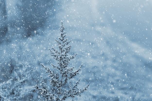 Boże narodzenie tło z opadami śniegu i suchą roślinnością pokrytą śniegiem na pierwszym planie, zimowy nastrój