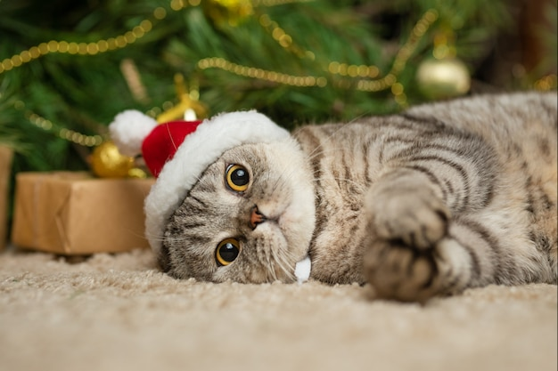 Bożenarodzeniowy kot w czerwonym święty mikołaj kapeluszu, nowy rok, kartka z pozdrowieniami, sztandar