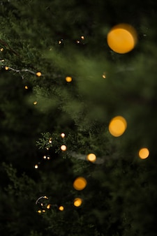 Bożenarodzeniowy pojęcie z pięknym drzewem i światłami