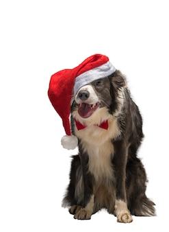 Bożonarodzeniowy pies rasy border collie w czerwonym kapeluszu świętego mikołaja na białym tle na białym tle