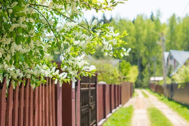 Brama, ogrodzenie i wiosna natura. kolorowe tło wiosna, wejście do domu, urok krawężnika.