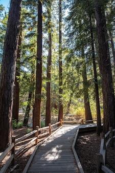 Brązowa drewniana ścieżka między zielonymi drzewami w ciągu dnia