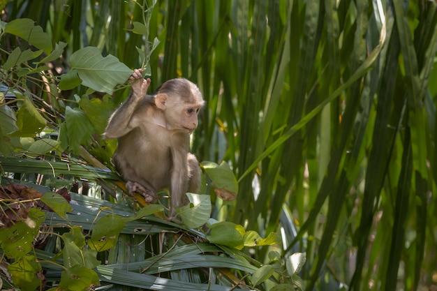 Brązowa małpa siedzi na zielonej roślinie