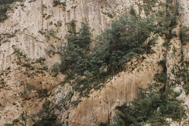 Brązowa skała z rosnącymi na niej sosnami. naturalne tło