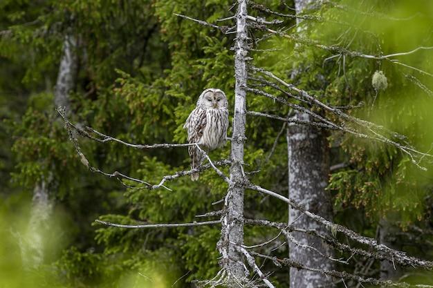 Brązowa sowa siedząca na gałęzi drzewa
