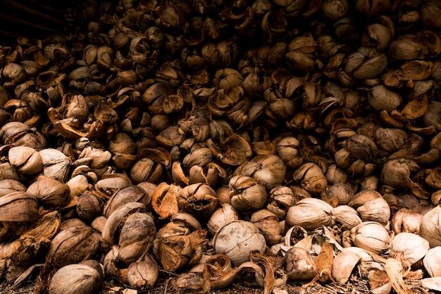 Brązowa sucha łuska skórki kokosowej.