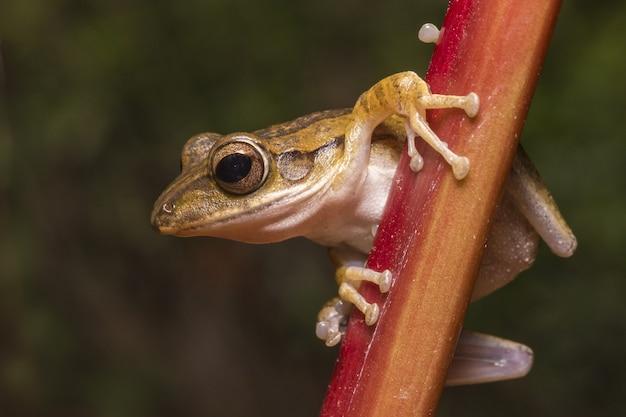 Brązowa żaba na drewnianym płocie z bliska
