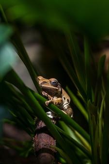 Brązowa żaba na zielonych łodygach.