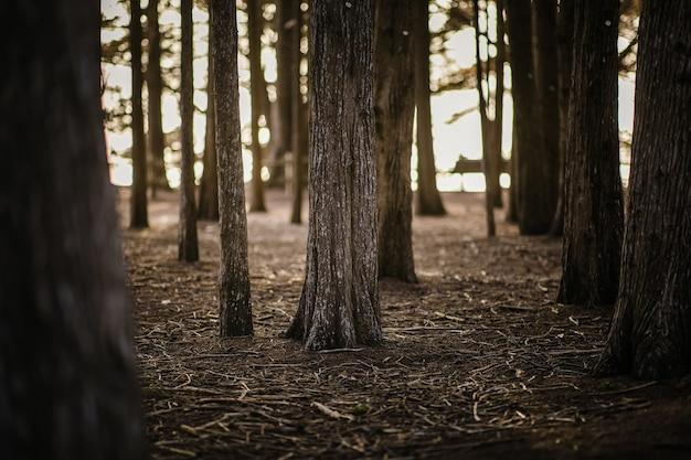 Brązowe drzewa na brązowej glebie