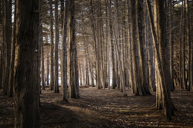 Brązowe drzewa na brązowym polu w ciągu dnia