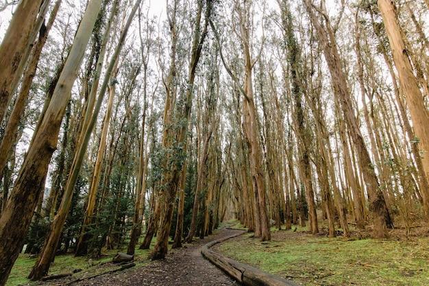 Brązowe drzewa na polu zielonej trawie w ciągu dnia