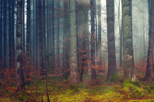 Brązowe drzewa na polu zielonej trawie