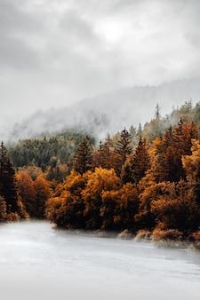 Brązowe drzewa na ziemi pokryte śniegiem w ciągu dnia