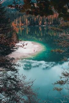 Brązowe drzewa nad jeziorem w ciągu dnia