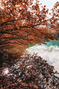 Brązowe drzewa w pobliżu zbiornika wodnego w ciągu dnia