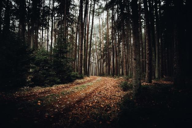 Brązowe i zielone drzewa w ciągu dnia