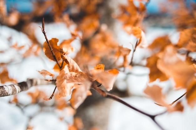Brązowe liście na gałęzi drzewa